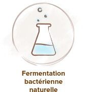 fermentation acide hyaluronique