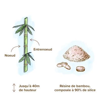 Apparence-du-bambou