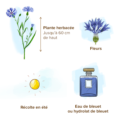 Apparence-bleuet