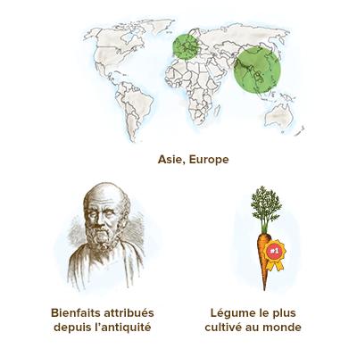 origine-de-la-carotte