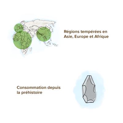 Origine-geographique-carvi