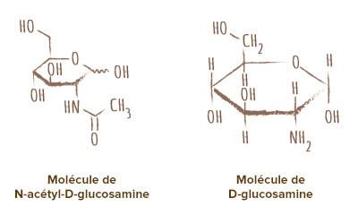 molécule chitine