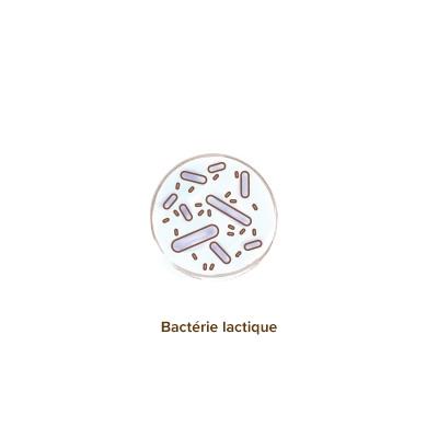 apparence_des _ferments_lactiques