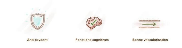 Acheter Ginkgo Biloba - Les pilules pour booster le cerveau et la concentration - Le ...