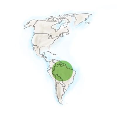 origine-geographique-gomphrena