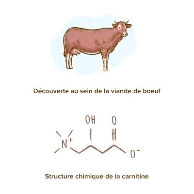 origine-carnitine