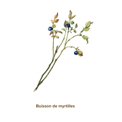 Apparence-myrtilles