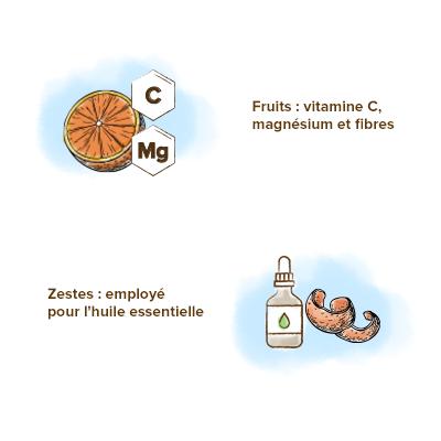Apparence-oranger-vitamines