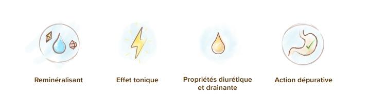 proprietes_effets_de_l_ortie