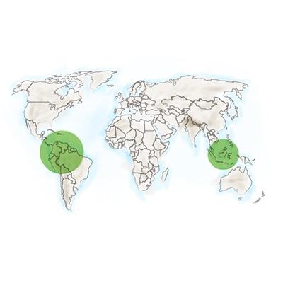 origine-geographique-papaye