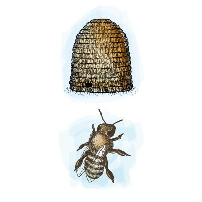 Origine_du_pollen