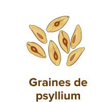 graines de psyllium