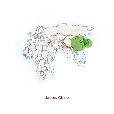 Origine_shiitake_geographie